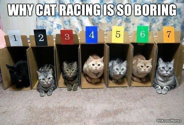 cat racing.jpg