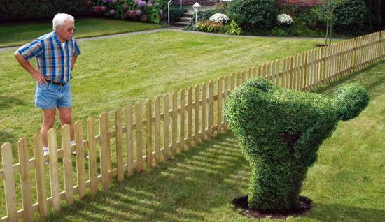 Box hedge.jpg