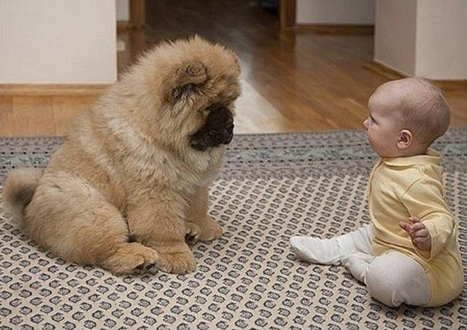 baby with dog.jpg