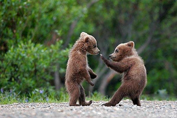 Bear Karate.jpg
